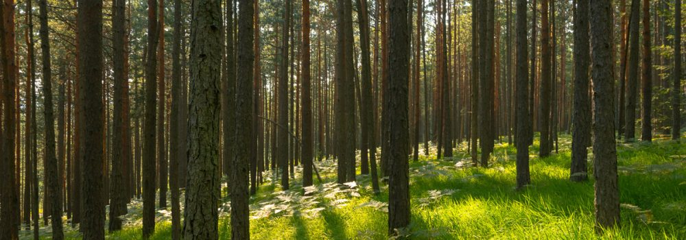 Image of outdoors nature in forest